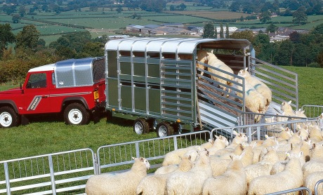 Livestock 187 Ifor Williams Trailers Ltd Britain S Leading